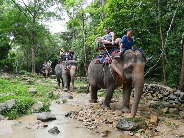 Koh Samui Elephant Trekking Trip 1 Hour